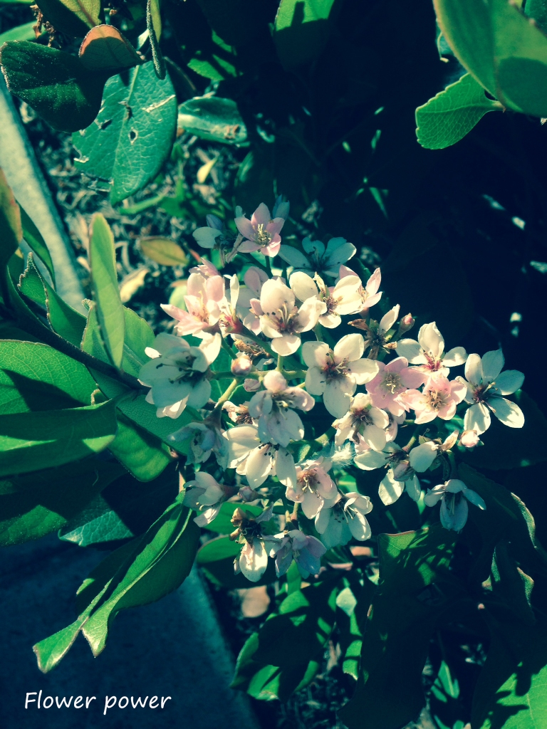 sunday april 6 14 c